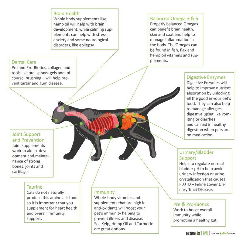 Vitamin & Supplements Cat Diagram