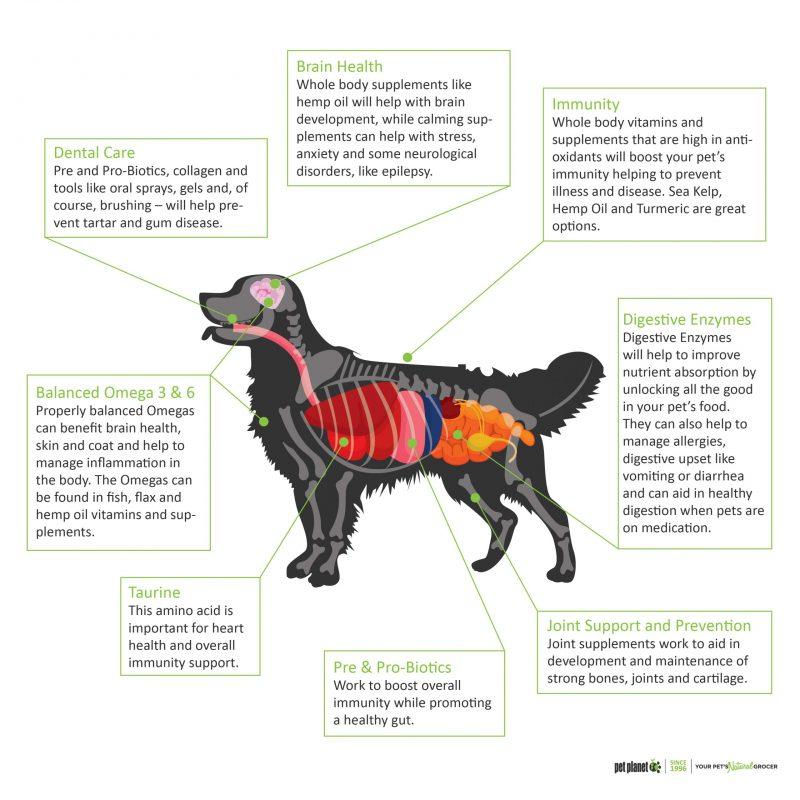 Vitamin & Supplements Dog Diagram